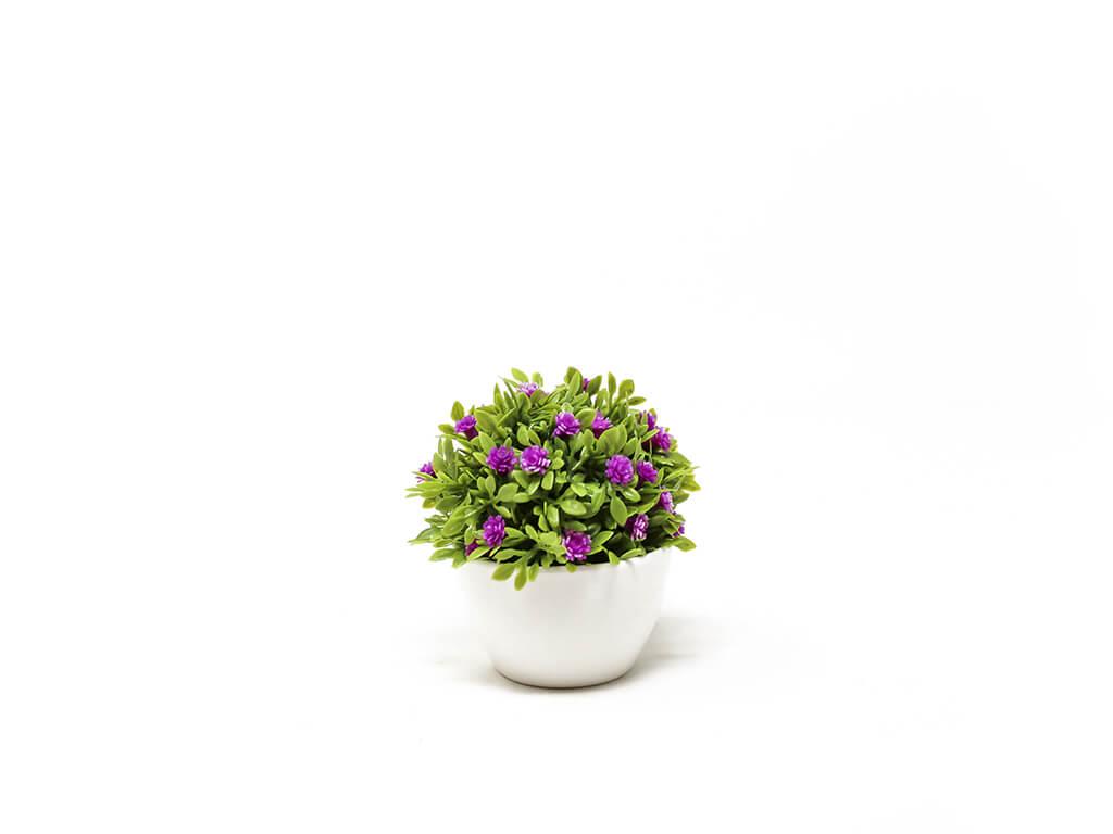 Bonsai flores 14 purpura
