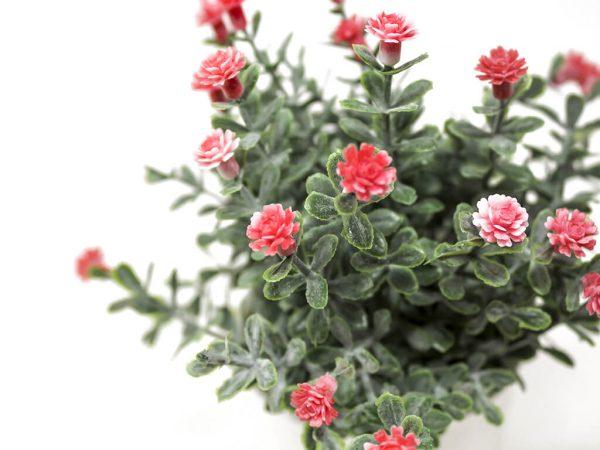 Bonsai flores 30 rojo detalle 2