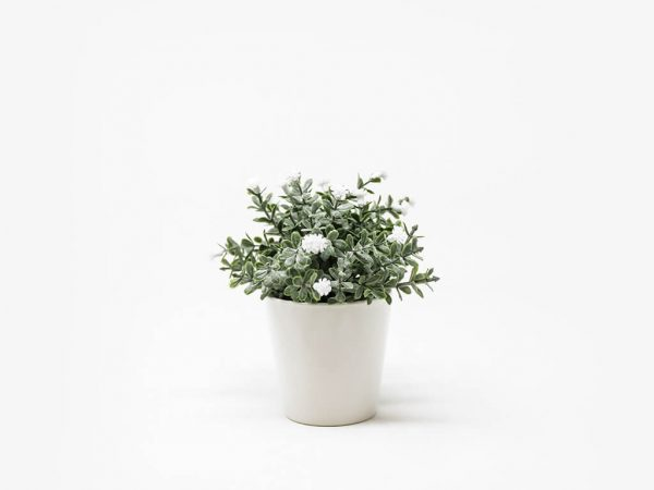 Bonsai flores 30a blanco