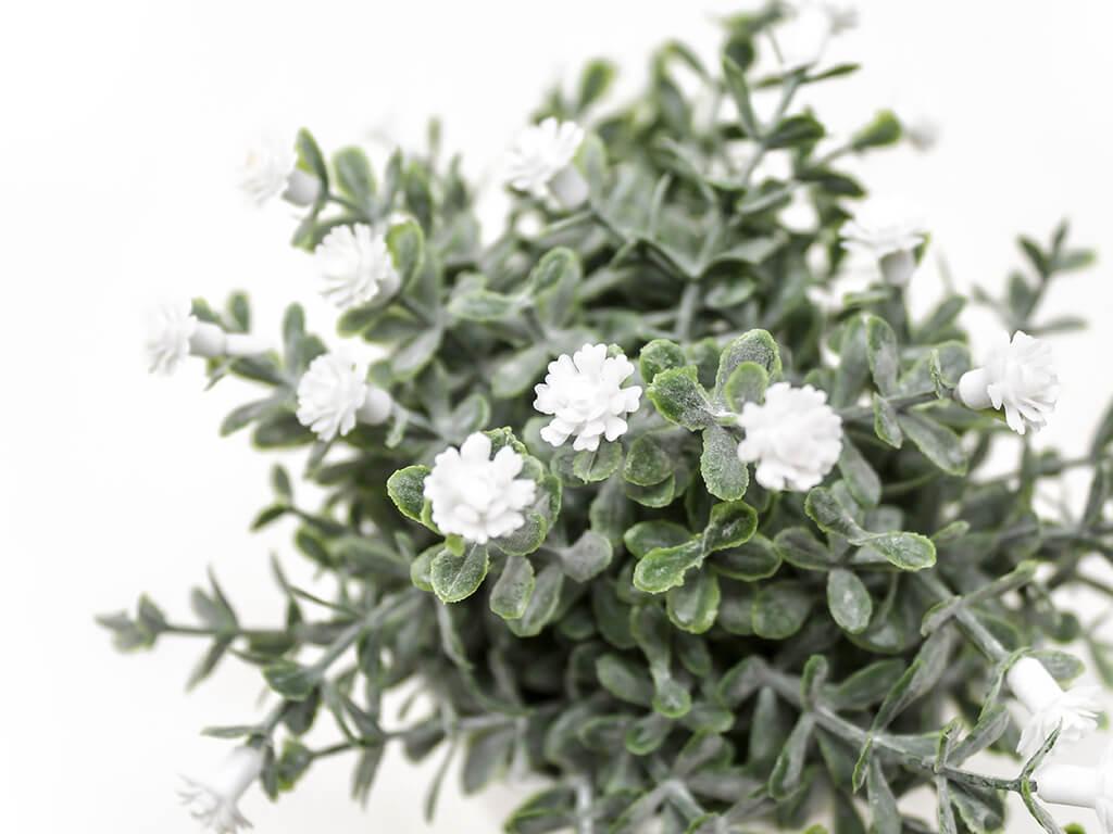 Bonsai flores 30a blanco detalle 2