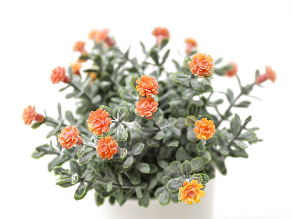 Bonsai flores 30d naranja detalle 2