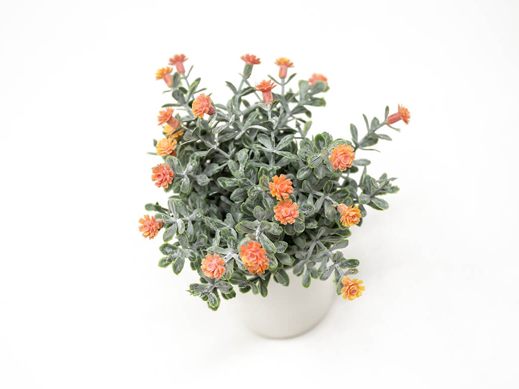 Bonsai flores 30d naranja detalle