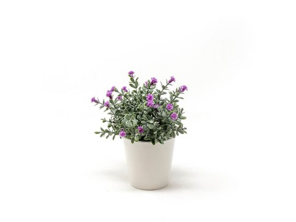 Bonsai flores 30f lavanda