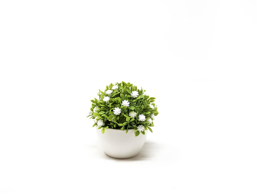 Bonsai flores 9 blanco