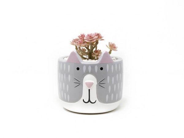 Planta animal 24 gato gris