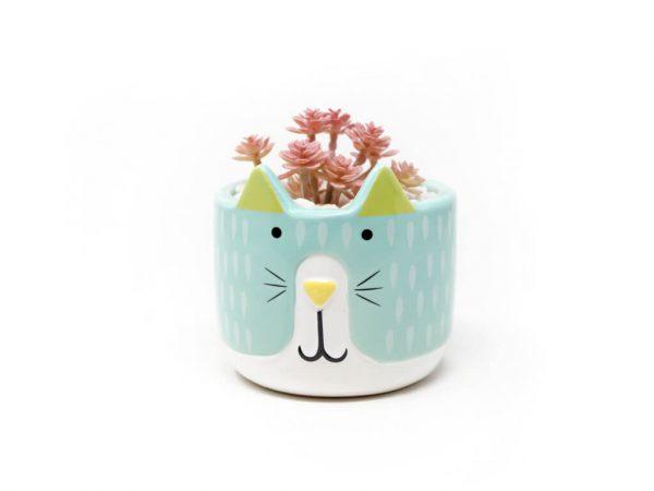 Planta animal 28 gato celeste
