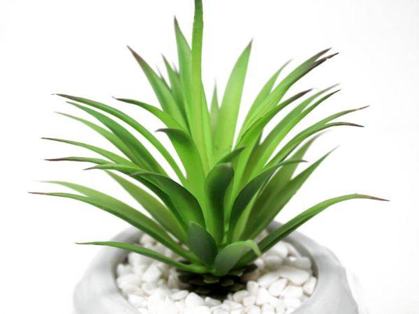 Planta animal 55 erizo gris detalle 2
